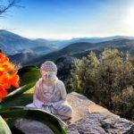 Radical Presence Living Retreat