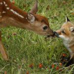 Nonviolent Communication  &  Focusing Retreat
